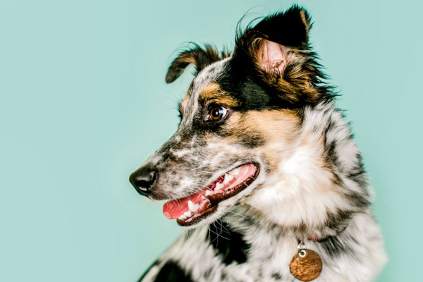 Pet featured sample  in Platteville