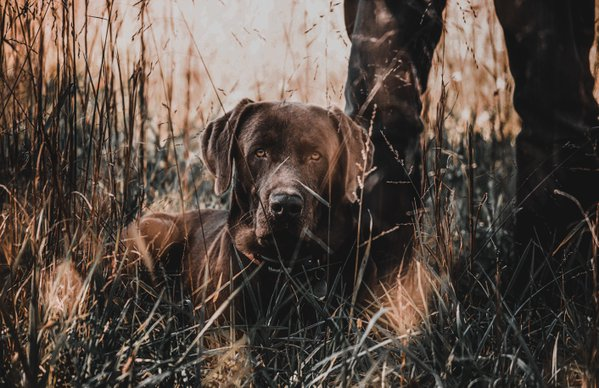 Pet example